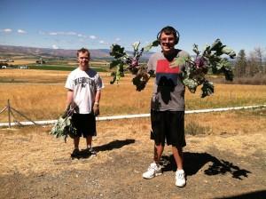 Trellis Center Harvest