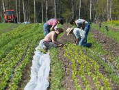 Beginning and Socially Disadvantaged Farmers