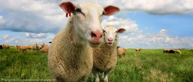Organic Livestock Farm Internships and Crew Jobs