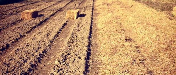 organic farming interns wanted