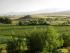 Vegetable Production Jobs Colorado