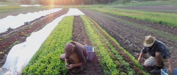 Ecological Farming Internships