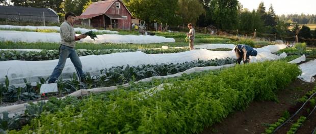 Farm Internship in Oregon