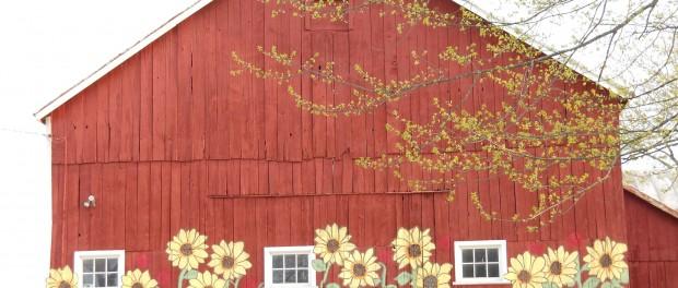 Retire to Farm Internship Opportunity