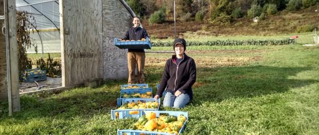 Vegetable Farmer Job