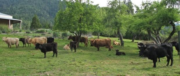 Farm Manager Job Available