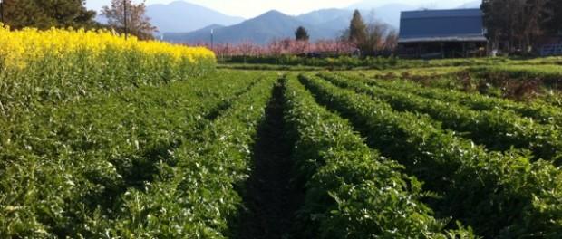 farm apprenticeships in Oregon