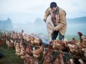 Pastured Livestock Internship