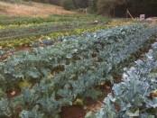 Oregon CSA Hiring Farm Manager or Intern