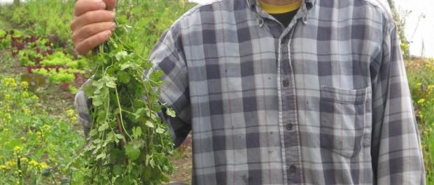 Uprising Farm Interns Wanted