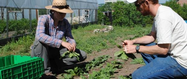 Capital Roots Urban Farm