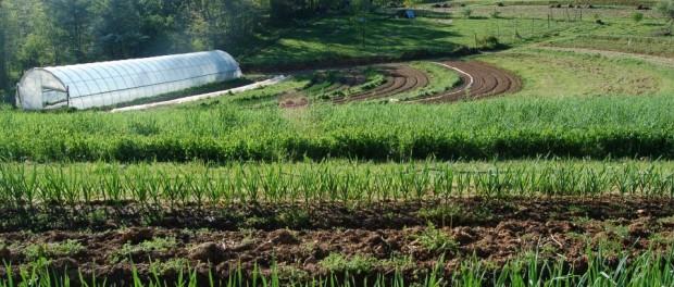 Starting a Farm