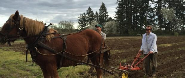 Horse Farming in Oregon