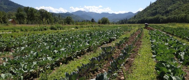 Oregon Farm Field