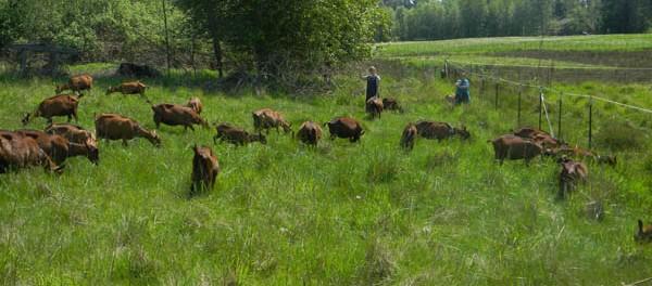 Goat Dairy