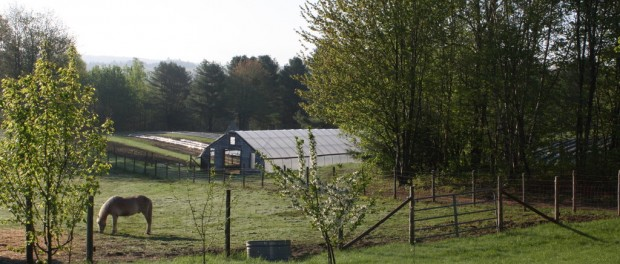 organic farm in Maine