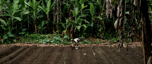 Farming in Hawaii