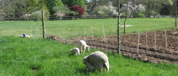 Farm Apprenticeship in Rhode Island