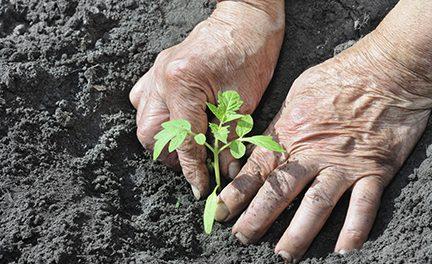 Cornell Small Farms Program