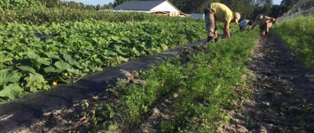 farm apprenticeship