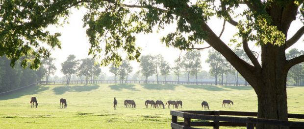 Kentucky horse farm