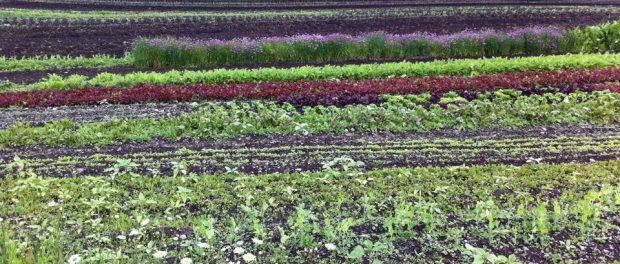 organic farm management