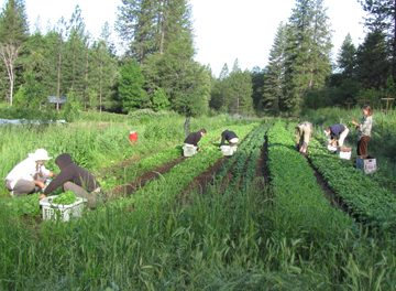 vegetable farming internships