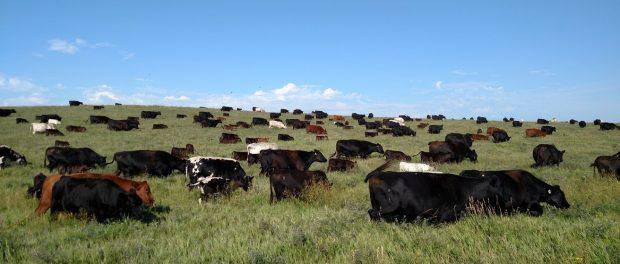 holistic ranching