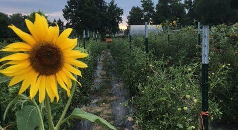 Food Project Farm