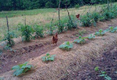 beyond organics farm