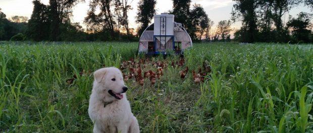 farm foundation