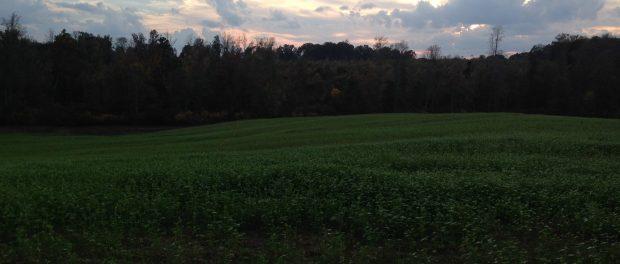 Antelier Farm