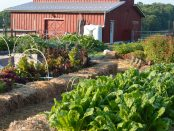 Summer Farm Internship in West Virginia