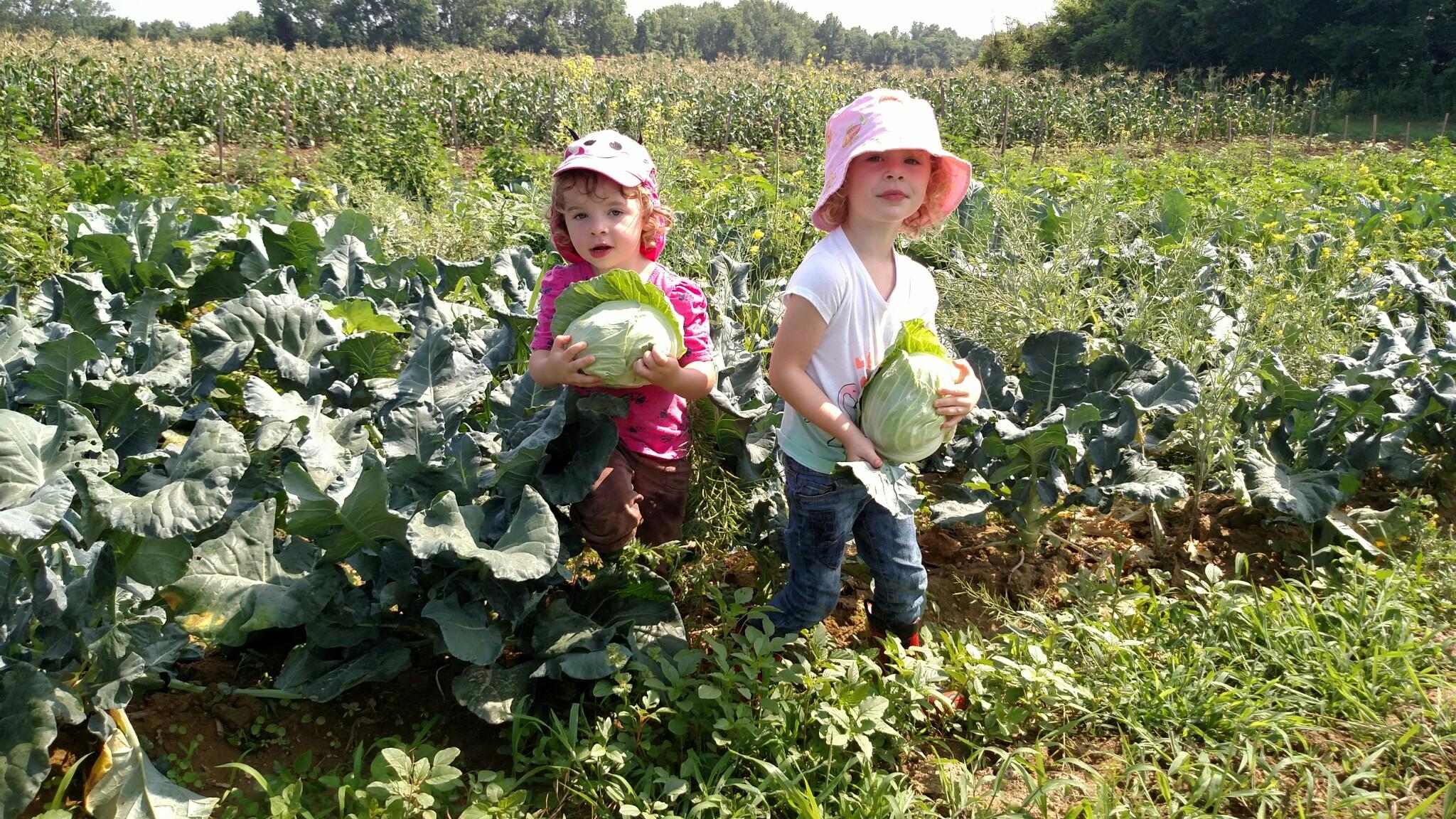organic vegetable and herb farm