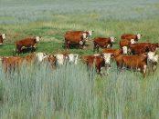 Grasslands Protection Program