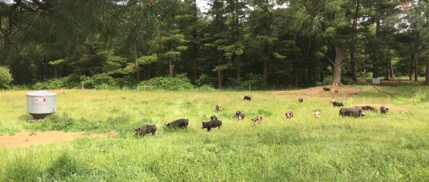 Assistant Farm Manager Job in Massachusetts