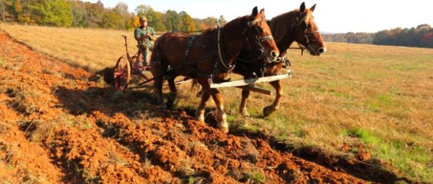 draft horse powered vegetable farm