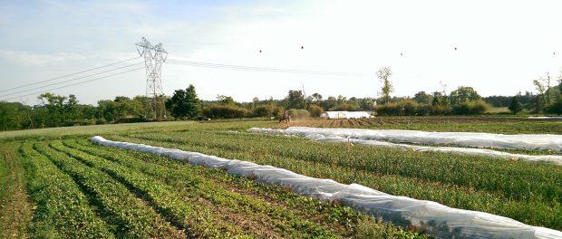 Organic Farm Internships in Michigan