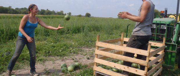 Farm Crew positions in Princeton, Minnesota
