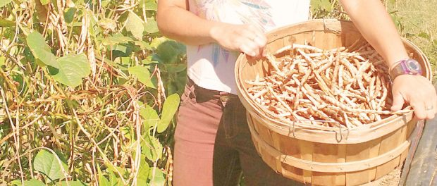 Athena's Harvest