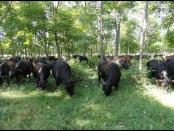 Agroforestry Trainings for Military Veterans