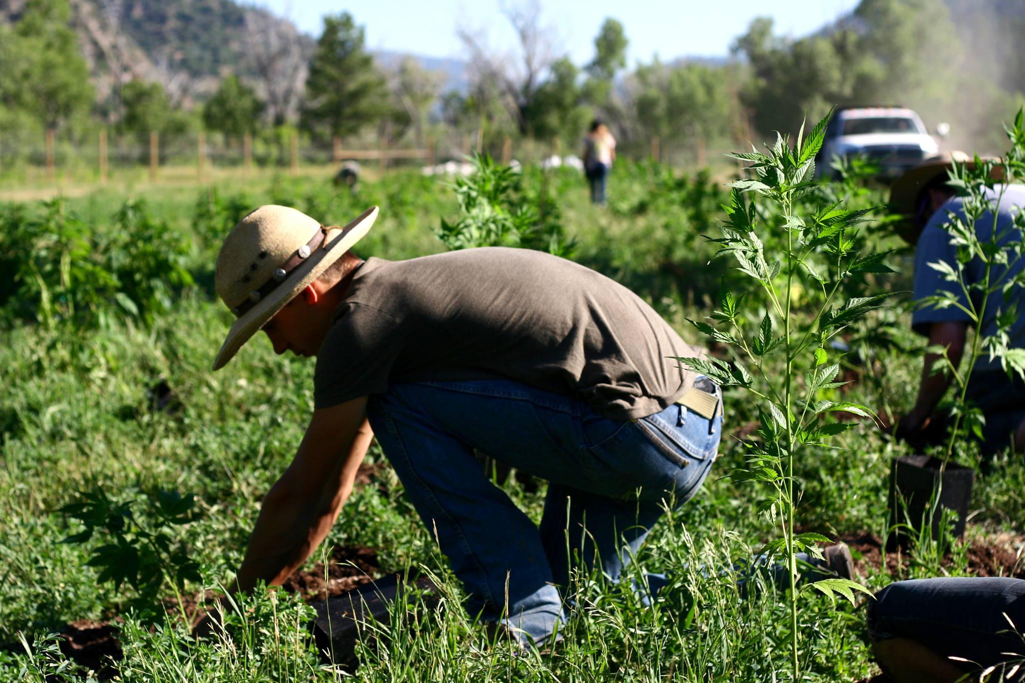 hemp growers education program