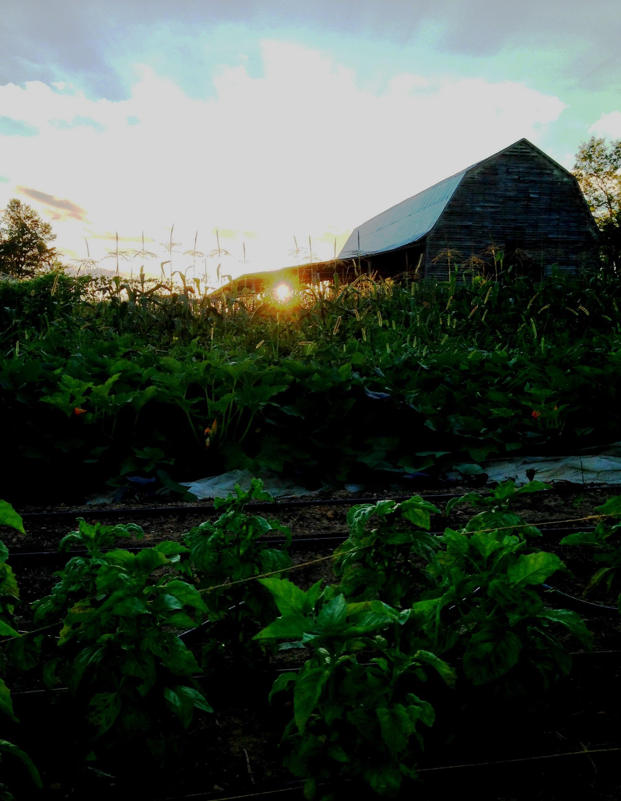 Dinner Bell Farm