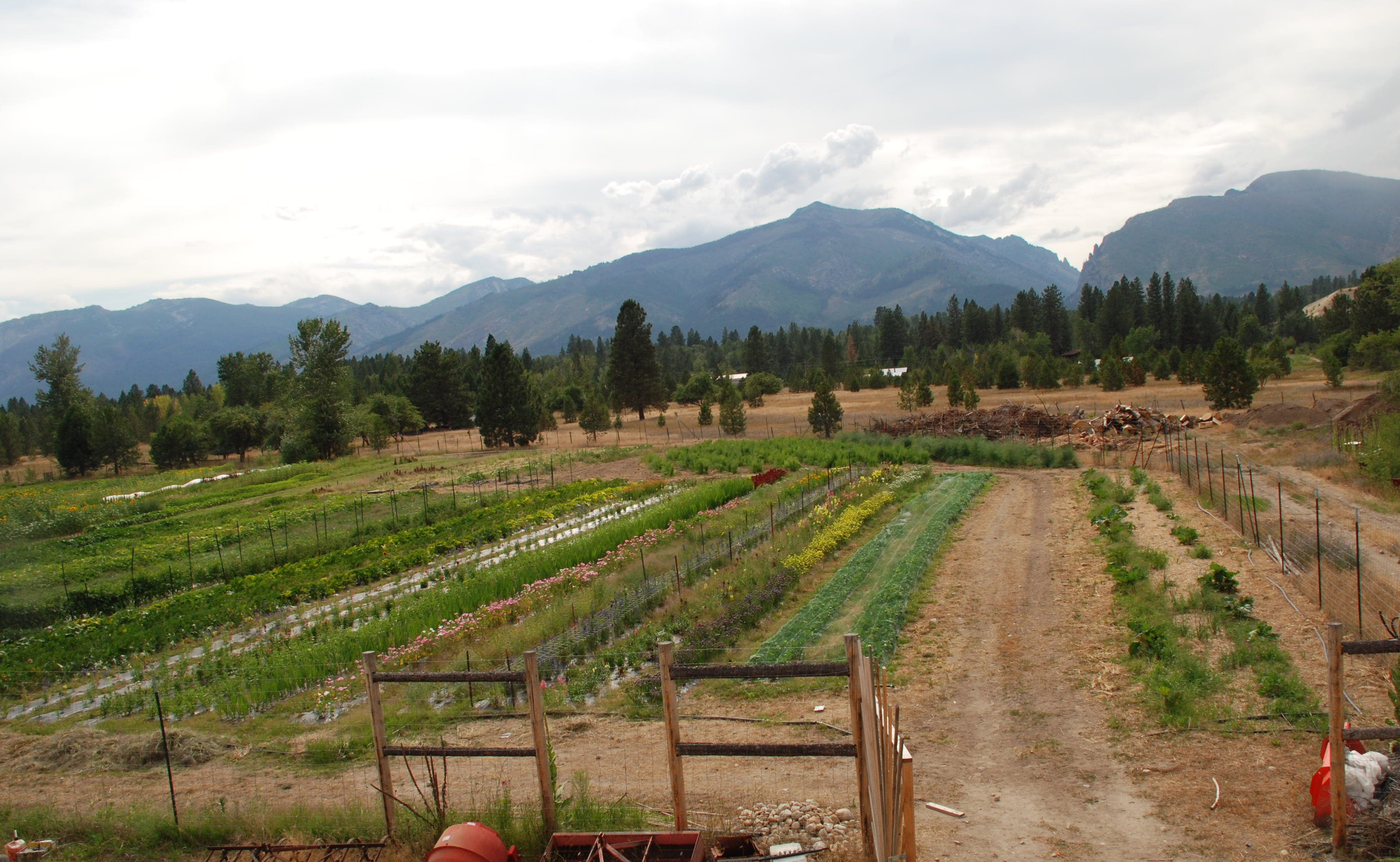 Montana Farms