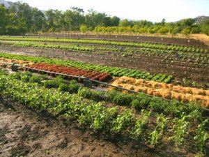 Local Farms Act