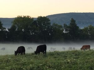 Land Access and Farm Succession