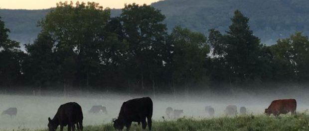 Vernon Valley Farm