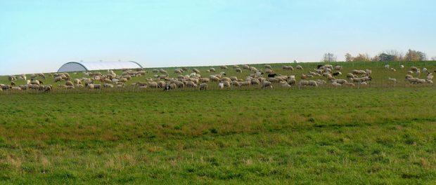 Grass-fed Organic Livestock Farm