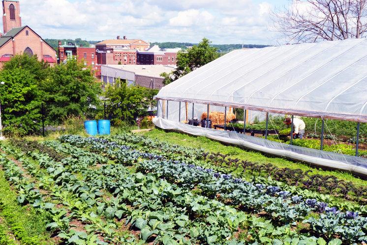 produce project farm asssistant