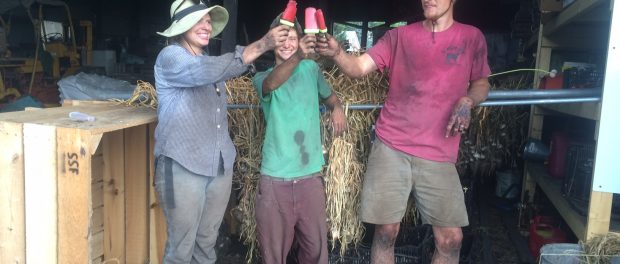 organic vegetable farm apprenticeships